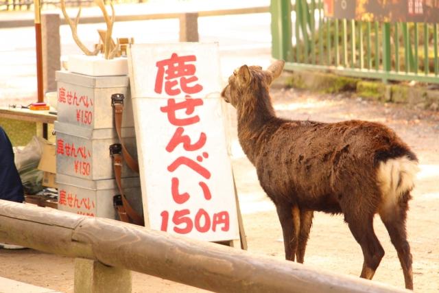 2014年-鹿せんべいとばし大会