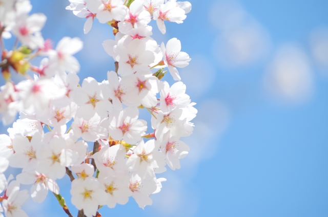 2014年-桜